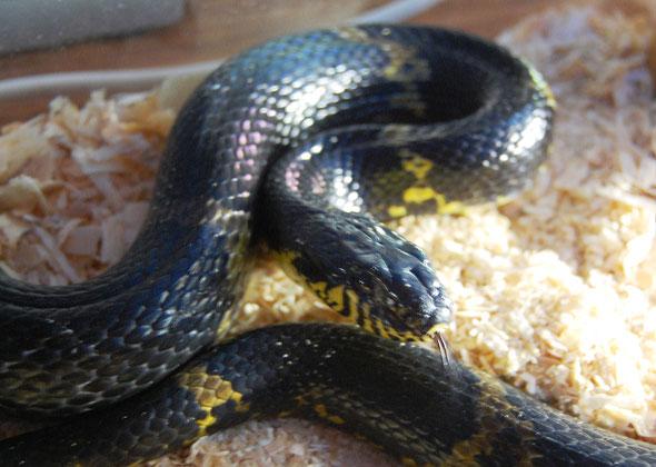 Сон беременная девушка и змея